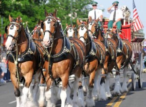 Clydesdales-GDT-061413-1